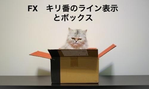 cat inbox